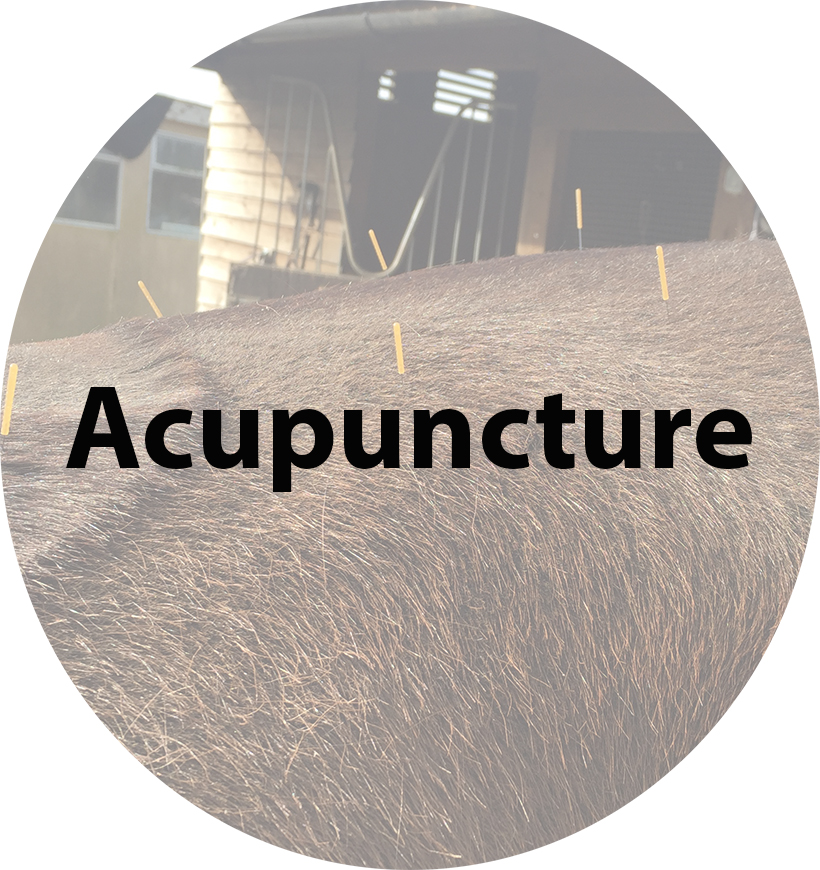 acupuncture(3).jpg