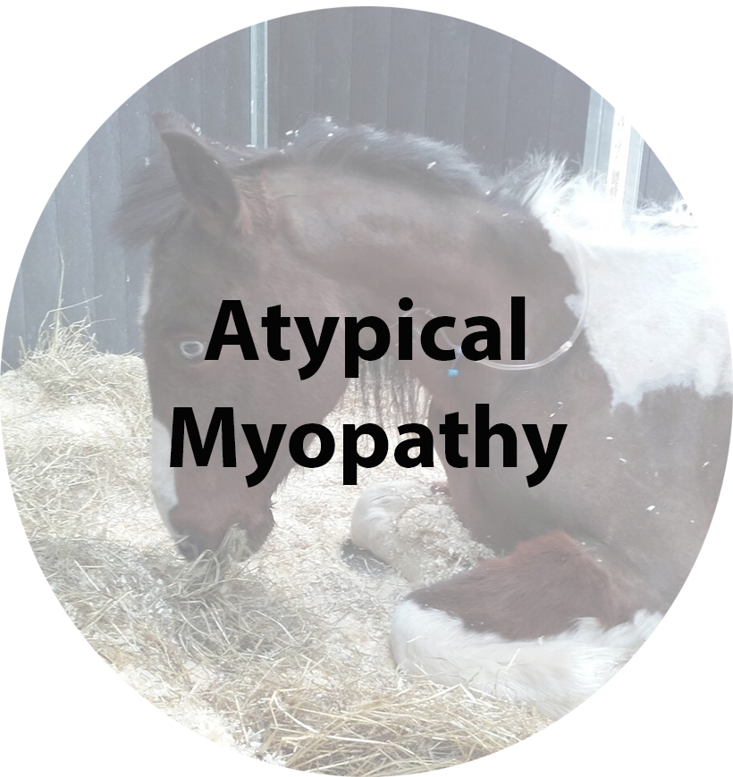 Atypical Myopathy(1).jpg