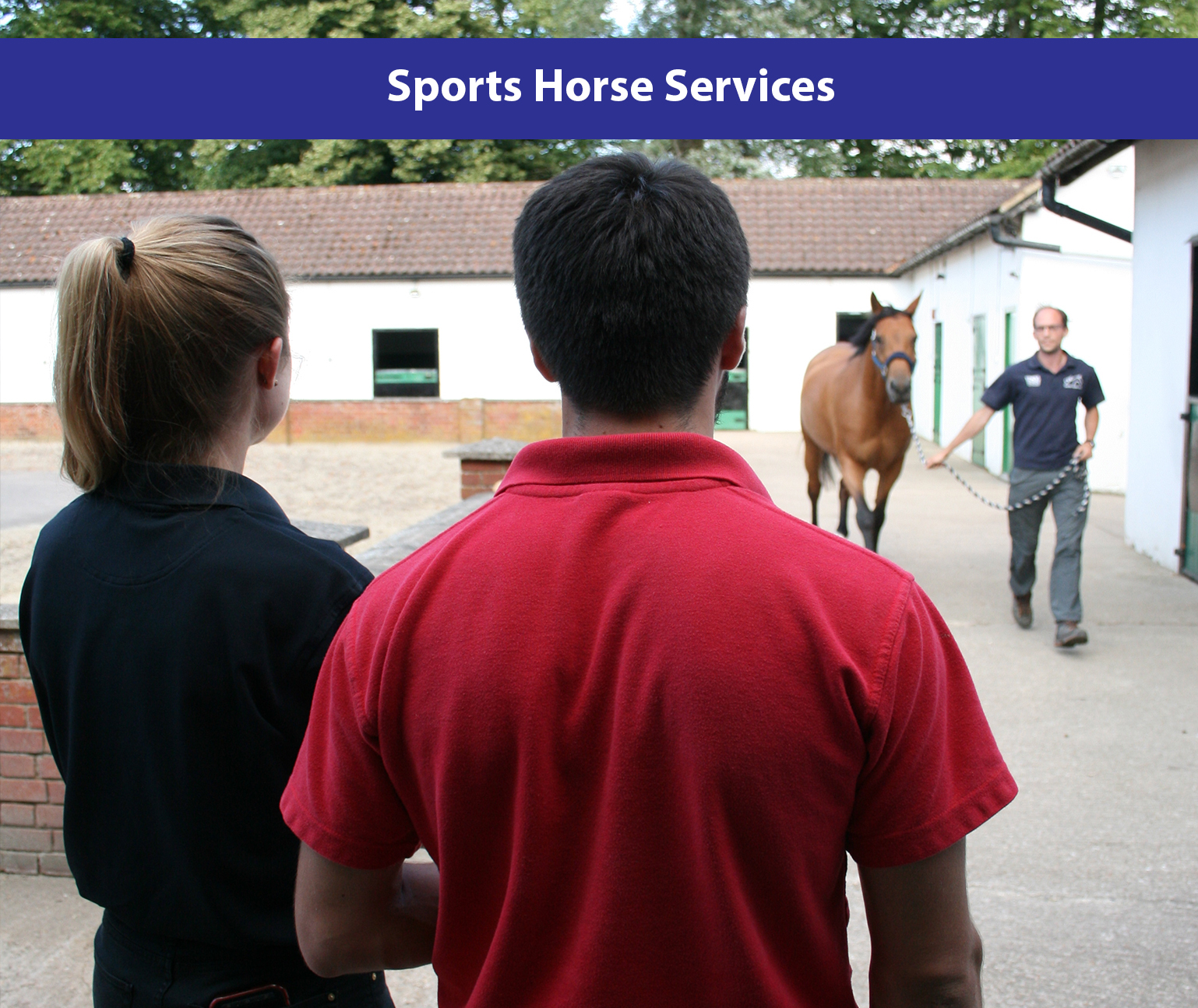 Sports Horse Services.jpg