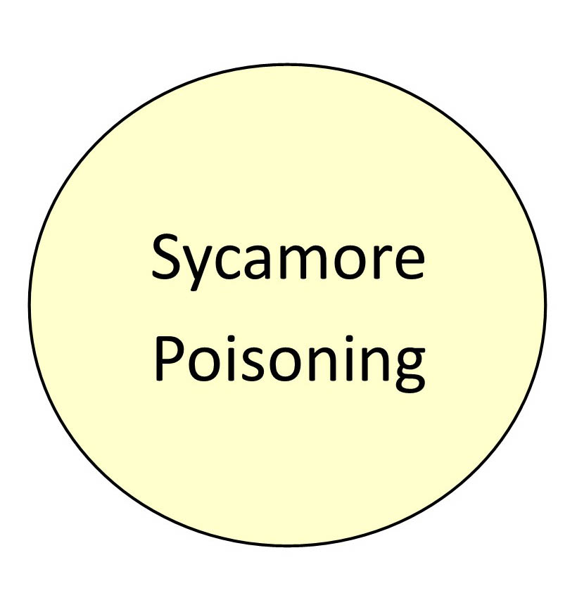 sycamore poisoning.jpg