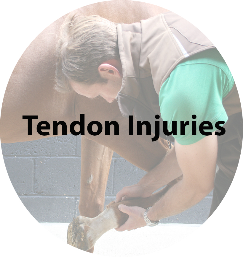 Tendon Injuries(1).jpg